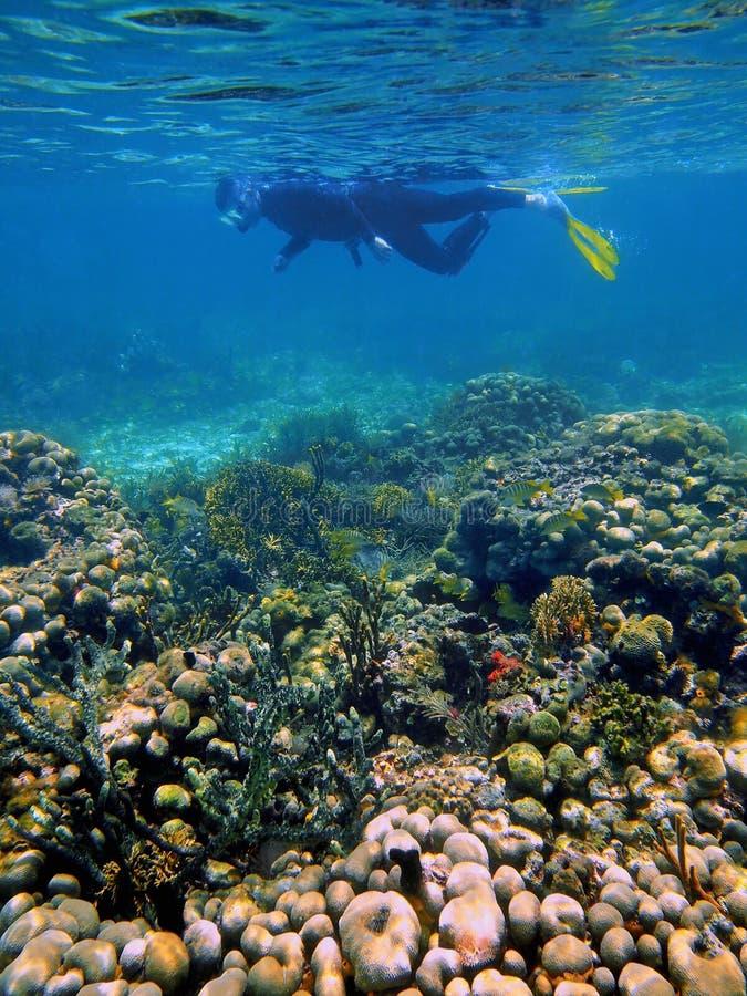 Snorkeler no mar das caraíbas imagens de stock