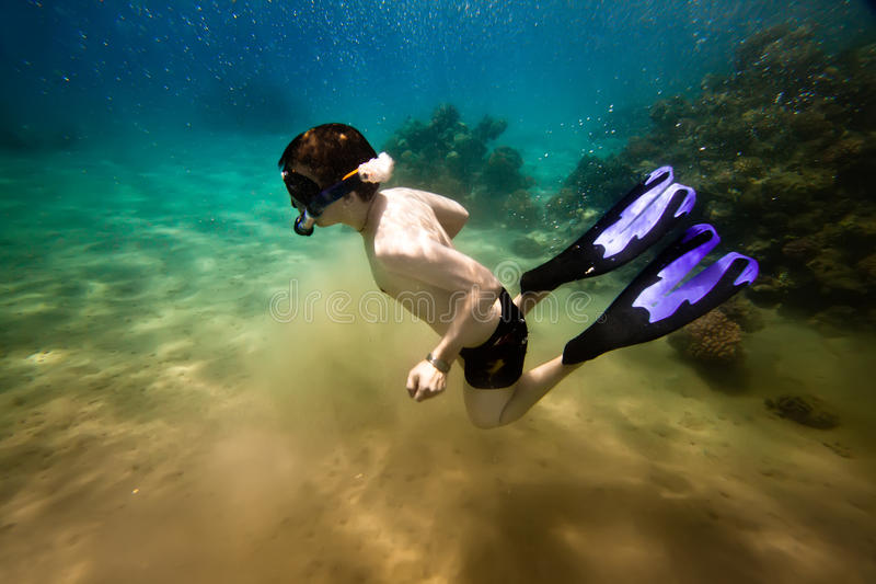 Download Snorkeler.  Red Sea Stock Photo - Image: 15369780