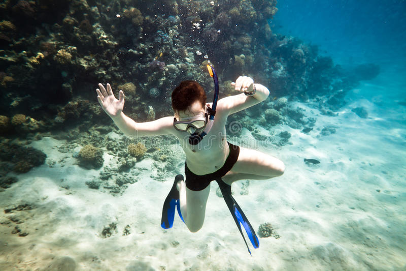 Download Snorkeler. Red sea stock image. Image of coral, life - 19031539