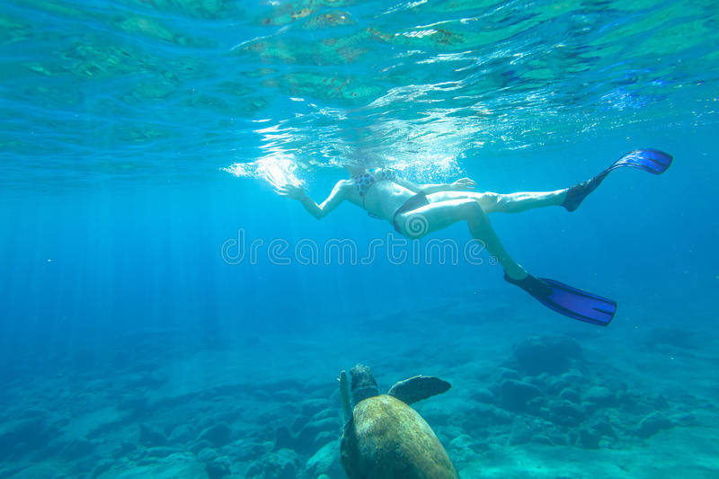 Snorkeler with sea turtle royalty free stock images