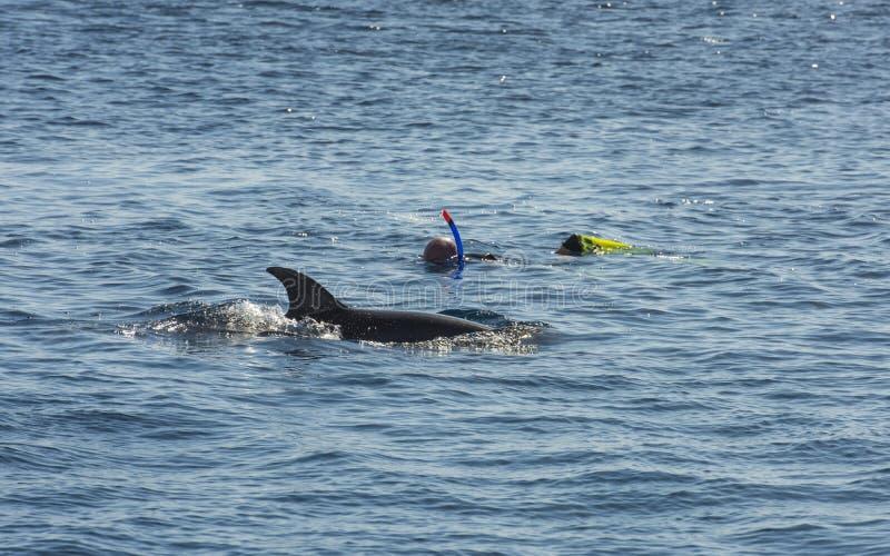 Snorkelers με το δελφίνι στην τροπική θάλασσα στοκ εικόνα με δικαίωμα ελεύθερης χρήσης
