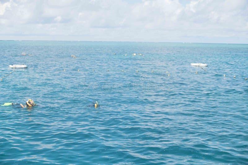 Snorkelers в большем барьерном рифе стоковая фотография