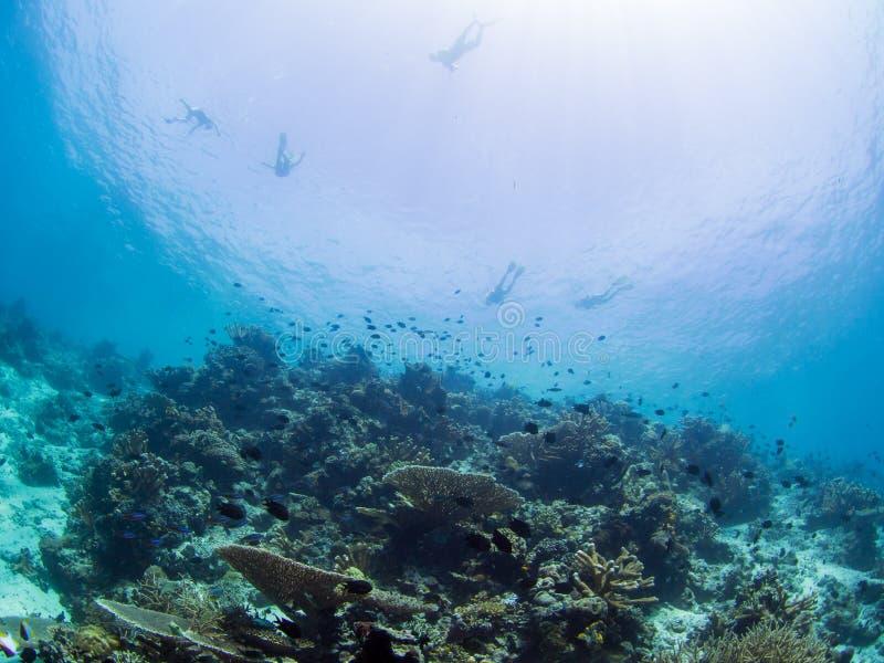 Snorkelers над коралловым рифом стоковые изображения rf