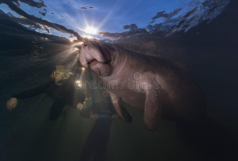 Snorkelers i manat zdjęcie royalty free