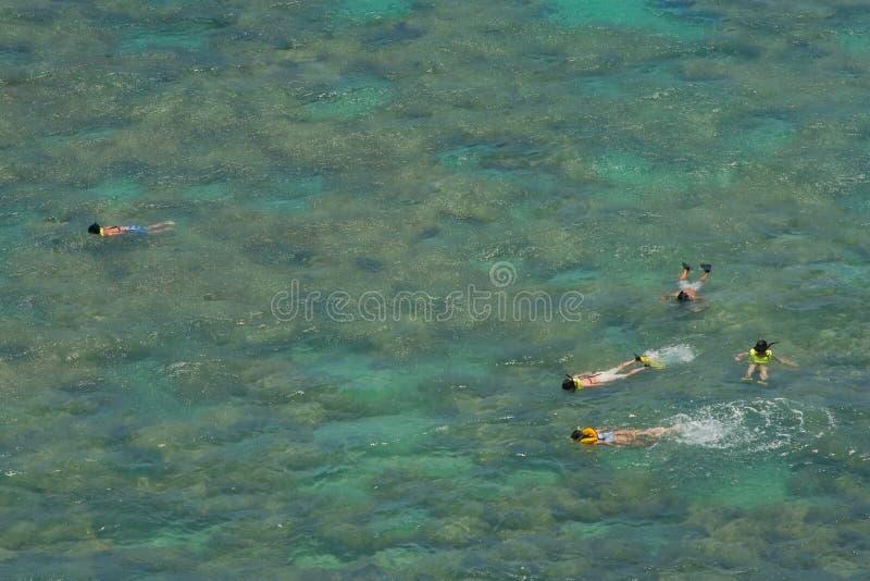 Snorkelers sobre el filón coralino en bahía tropical baja foto de archivo