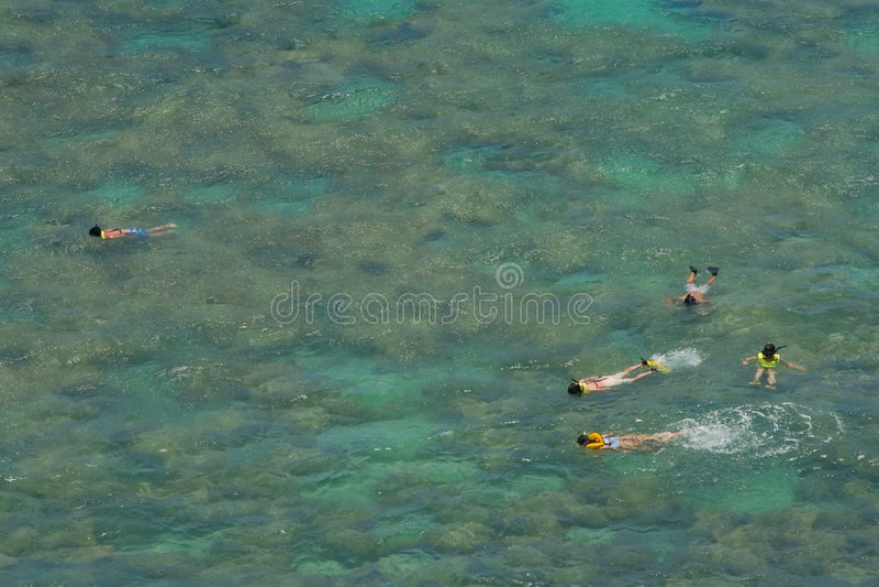 Snorkelers sobre o recife coral no louro tropical raso foto de stock