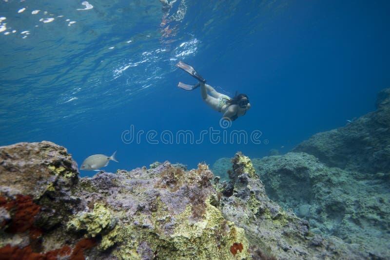 snorkeling женщина воды бирюзы стоковое фото rf