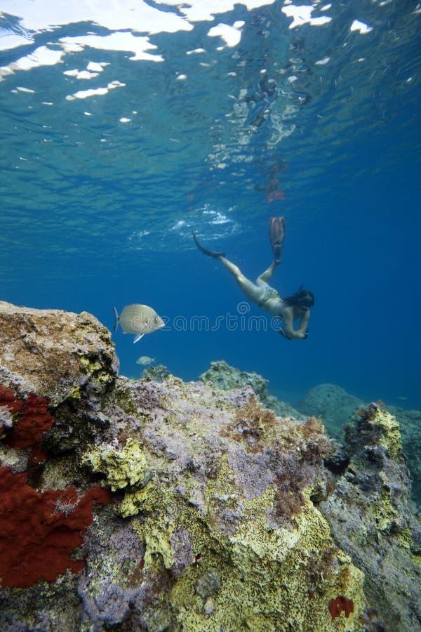 snorkeling женщина воды бирюзы стоковая фотография