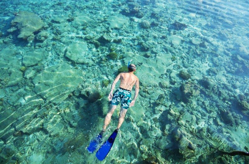 Download Snorkeling stock photo. Image of palm, tourism, beautiful - 25225370