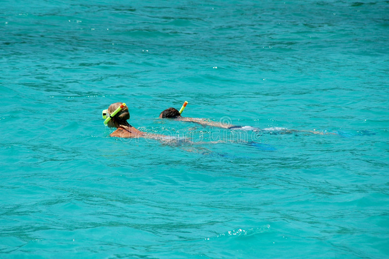 snorkeling royaltyfri foto