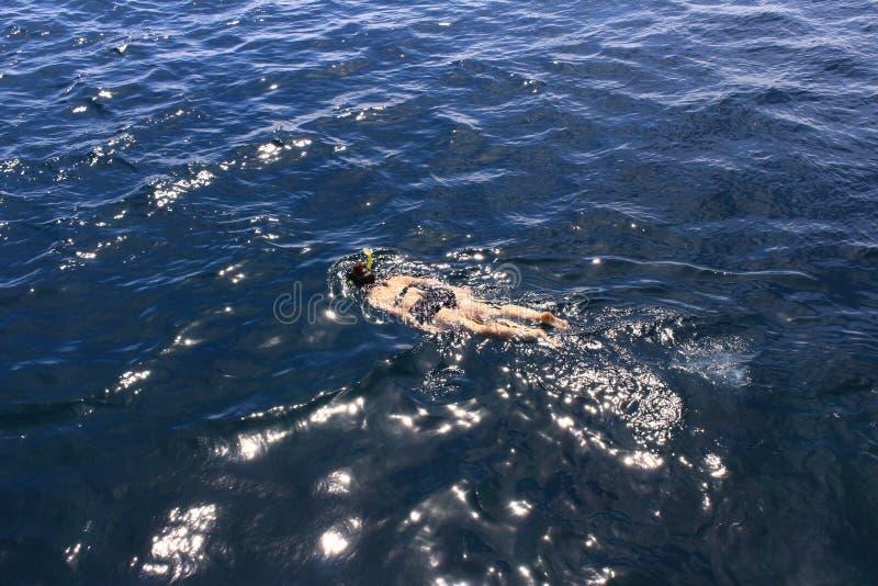 snorkeling lizenzfreie stockbilder