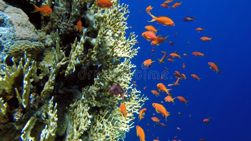 snorkeling fotografia stock libera da diritti