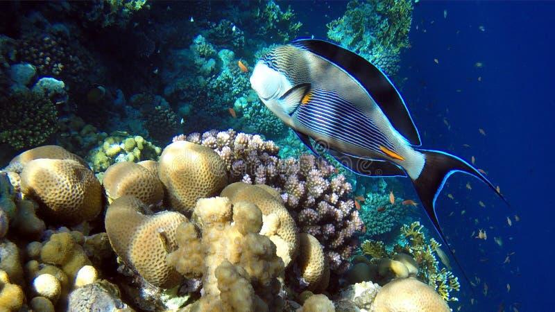 snorkeling immagine stock