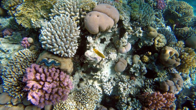snorkeling immagini stock libere da diritti