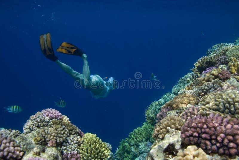 snorkeling royaltyfri fotografi