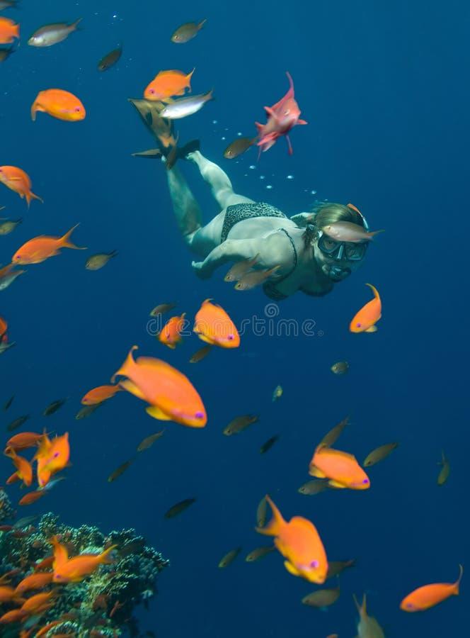 snorkeling arkivfoto