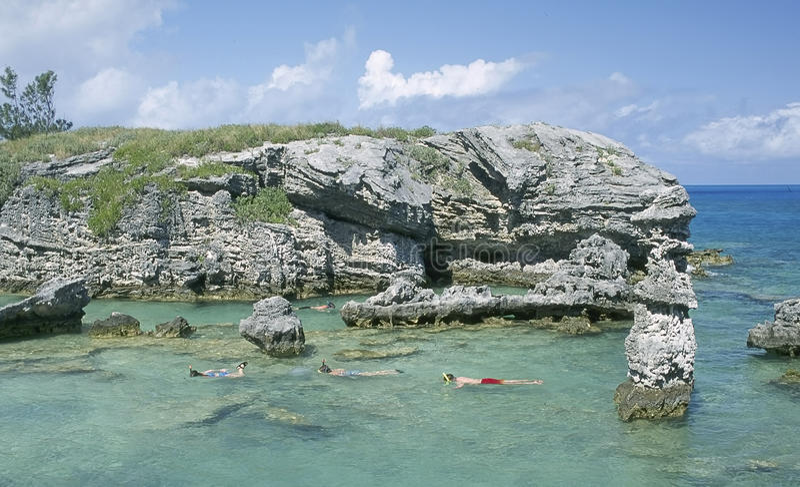 Snorkeling Bermuda royaltyfria bilder