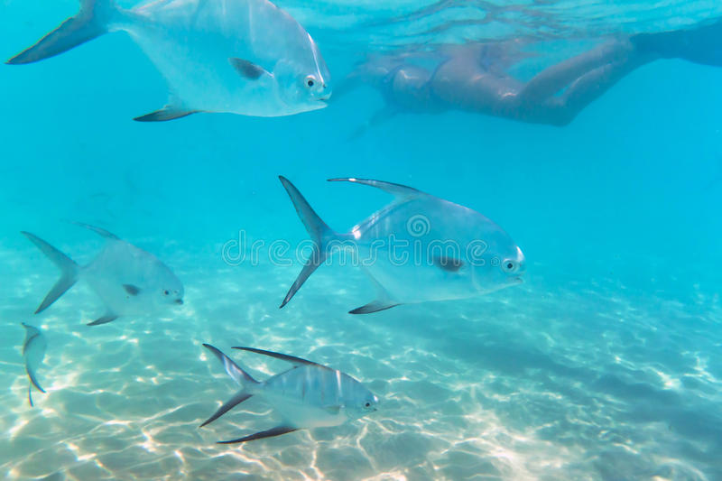 Snorkeling in Caribbean Sea of Mexico stock image