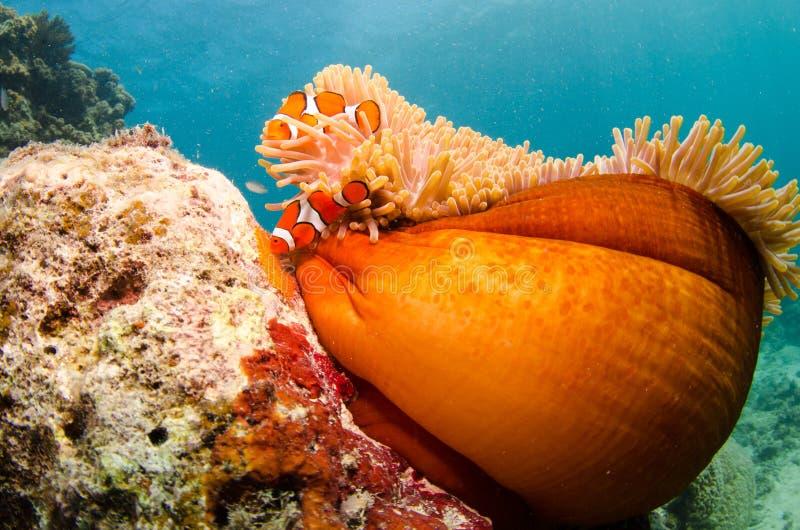 Snorkeling com coral e marisco imagens de stock