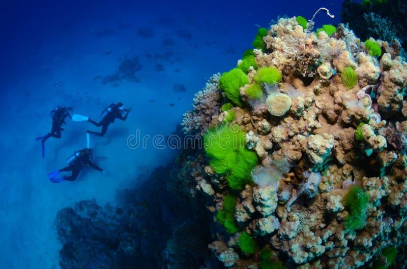 Snorkeling com recife fotos de stock royalty free