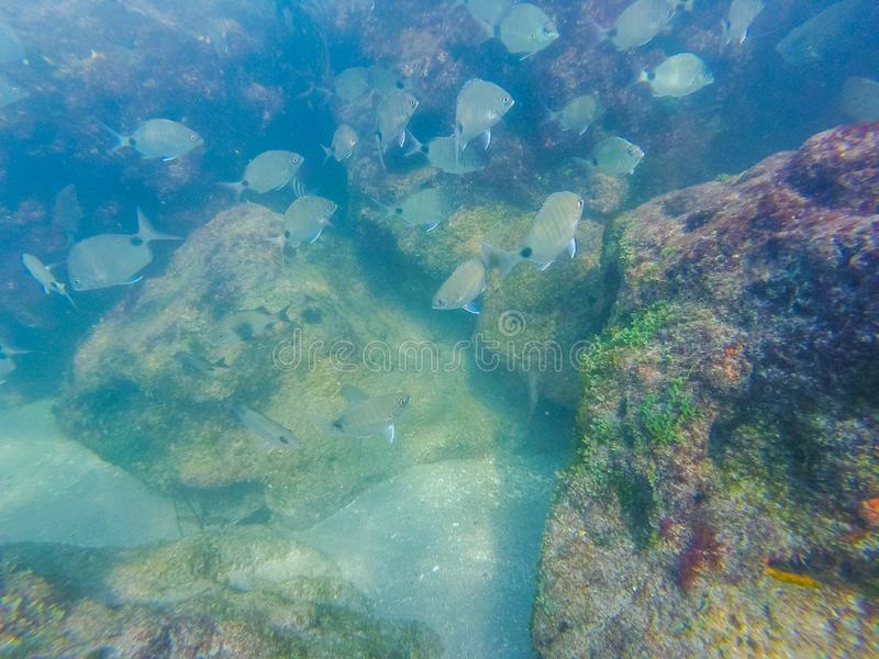 Snorkeling at a coral reef stock photos