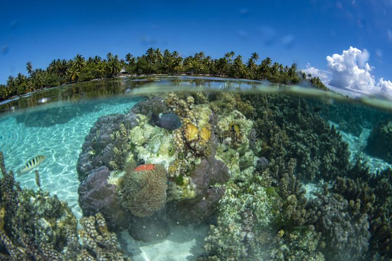 Snorkeling in french polynesia turquoise water lagoon. Coral gardens royalty free stock photos