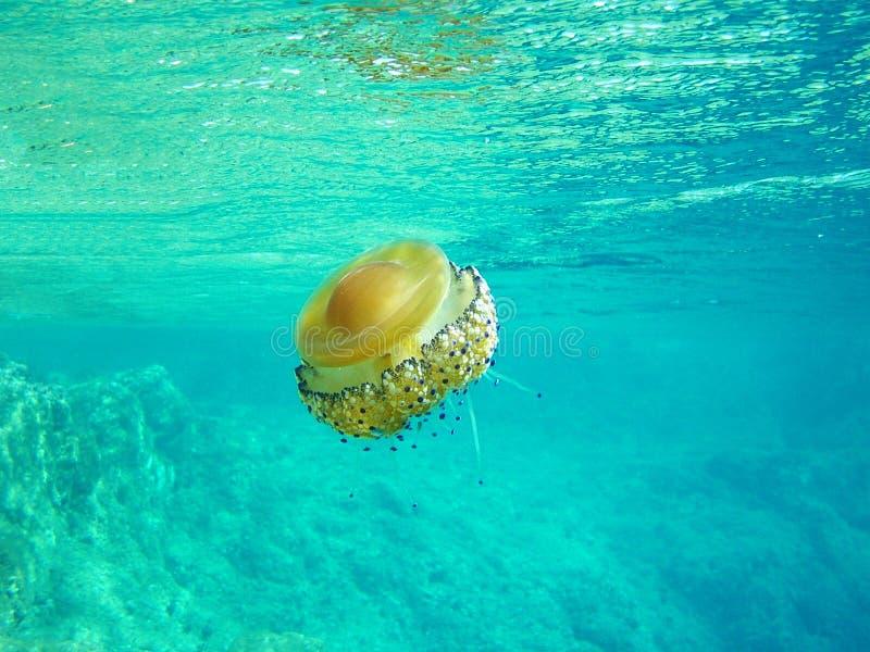 Snorkeling - Jellyfish Royalty Free Stock Photo