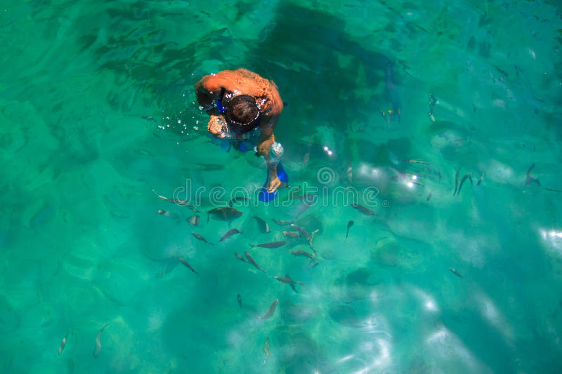 Snorkeling man with fish stock image