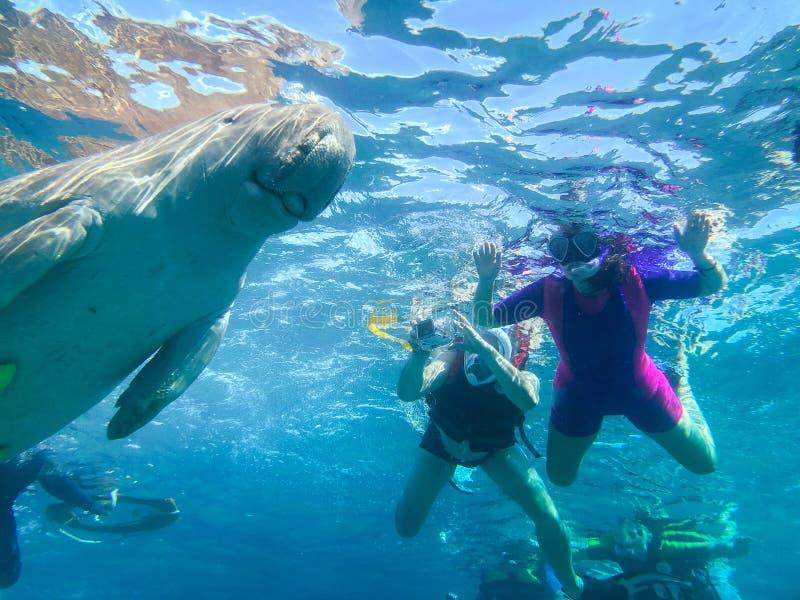 Snorkeling in Marsa Alam, Egypt. Dugong Dugon. Snorkeling in Marsa Alam, Egypt. Dugnong Dugon and tourist swimming stock photo