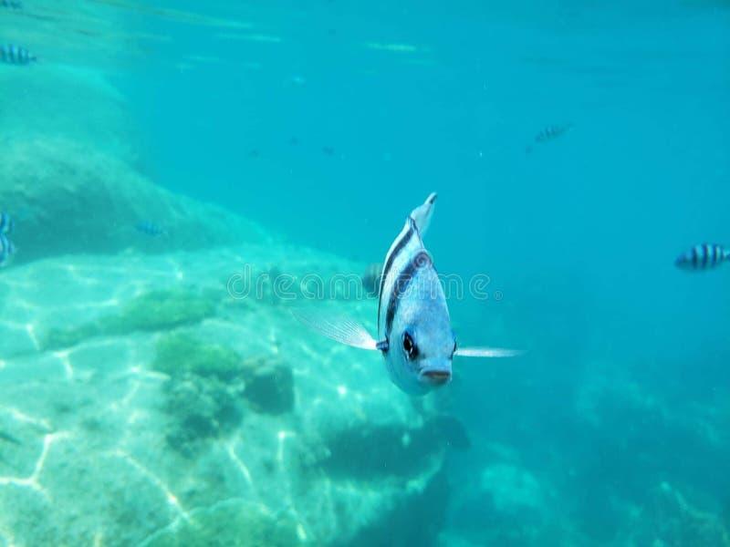 Snorkeling na koh Tao Tajlandia obraz royalty free
