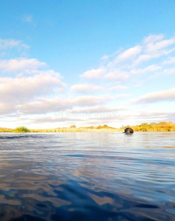 Snorkeling Piccanninie obrazy stock