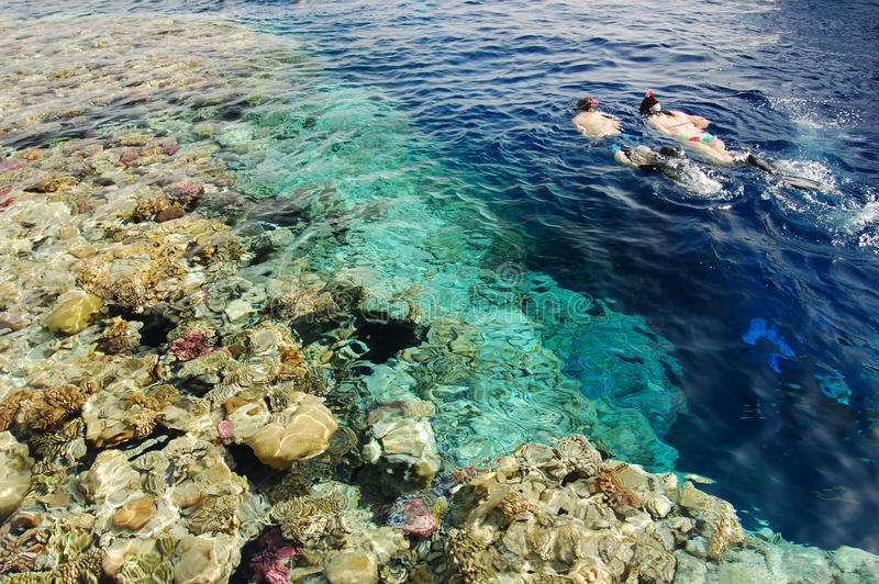 Snorkeling In Red Sea Stock Photos