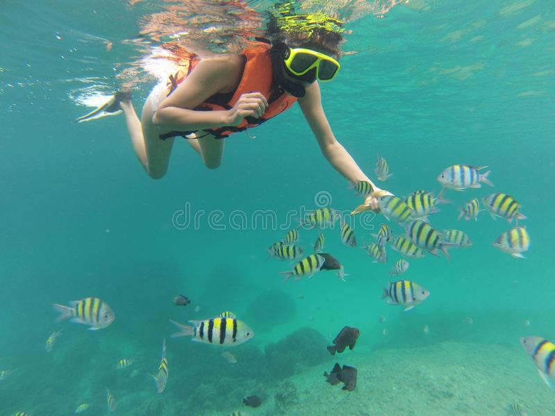 Snorkeling with tropical fish near raya Island in thailand. Featuring woman snorkeling in orange life vest stock image