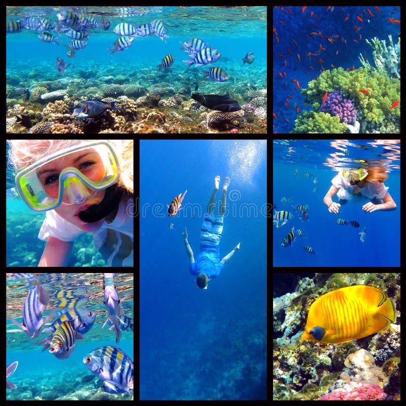 Snorkeling underwater collage stock image