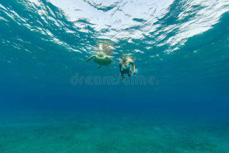 Snorkeling woman with hawksbill turtle, underwater photography. royalty free stock photo