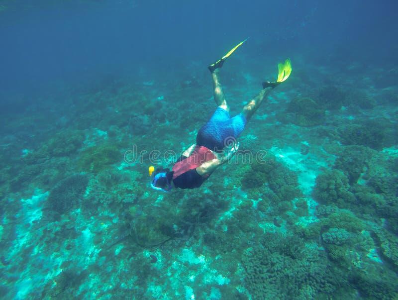 Snorkeling z dennym żółwiem Snorkel w żółtych żebrach zdjęcia stock