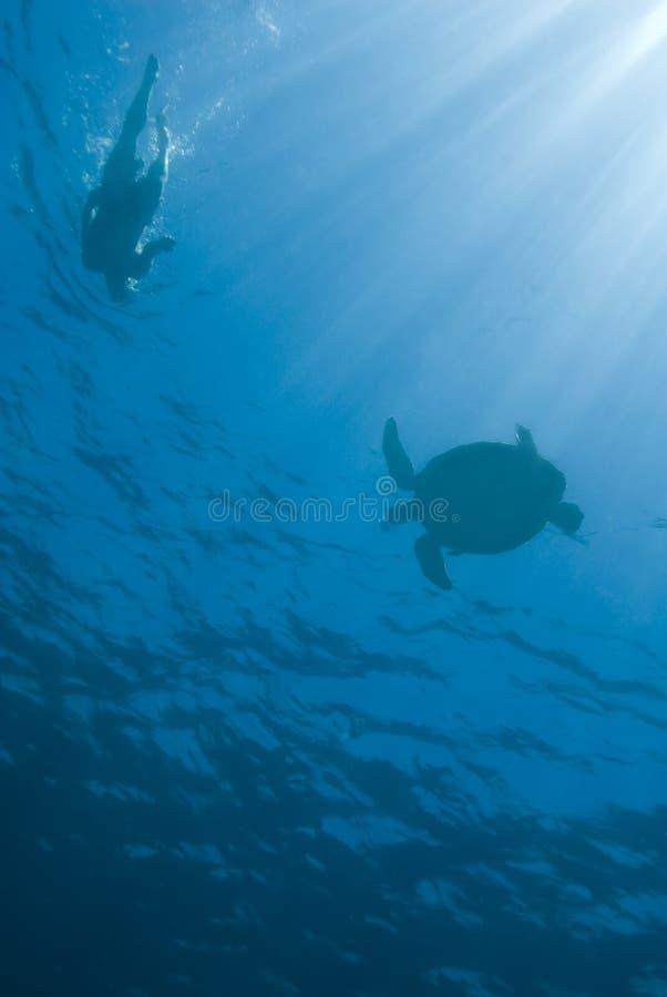 Snorkeller con la tartaruga verde. fotografie stock