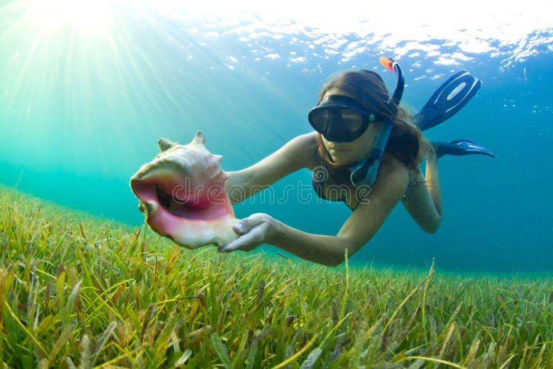 Snorkelling com um escudo do Conch