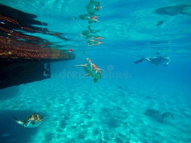 Snorkelling wokoło Westpunt z żółwiami zdjęcia royalty free