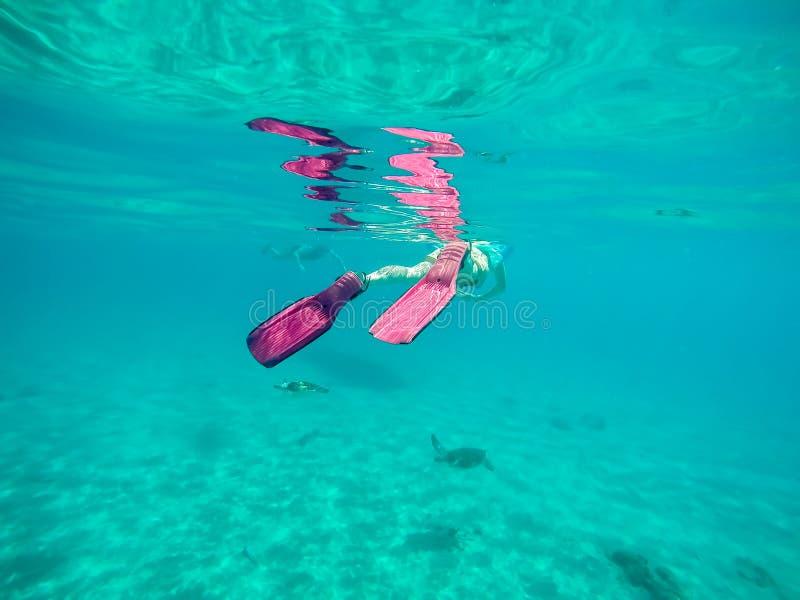 Snorkelling wokoło Westpunt z żółwiami zdjęcie stock