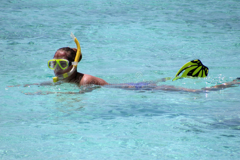 Download Snorking in the water stock image. Image of swimming - 24518685