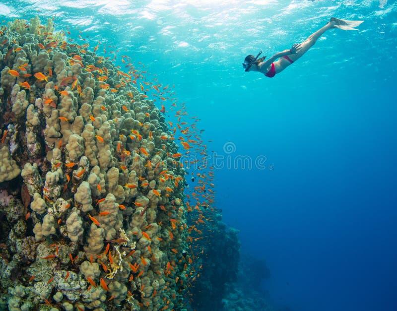 Snorkla kvinnan som undersöker härlig havsealife, undervattens- p royaltyfria bilder