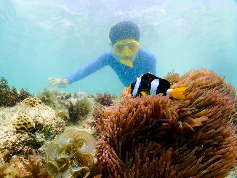 Snorkla på ön i det Thailand havet royaltyfri foto