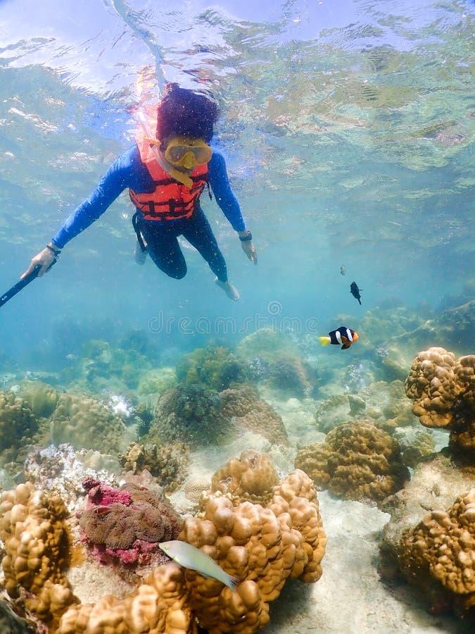 Snorkla på ön i det Thailand havet royaltyfri bild