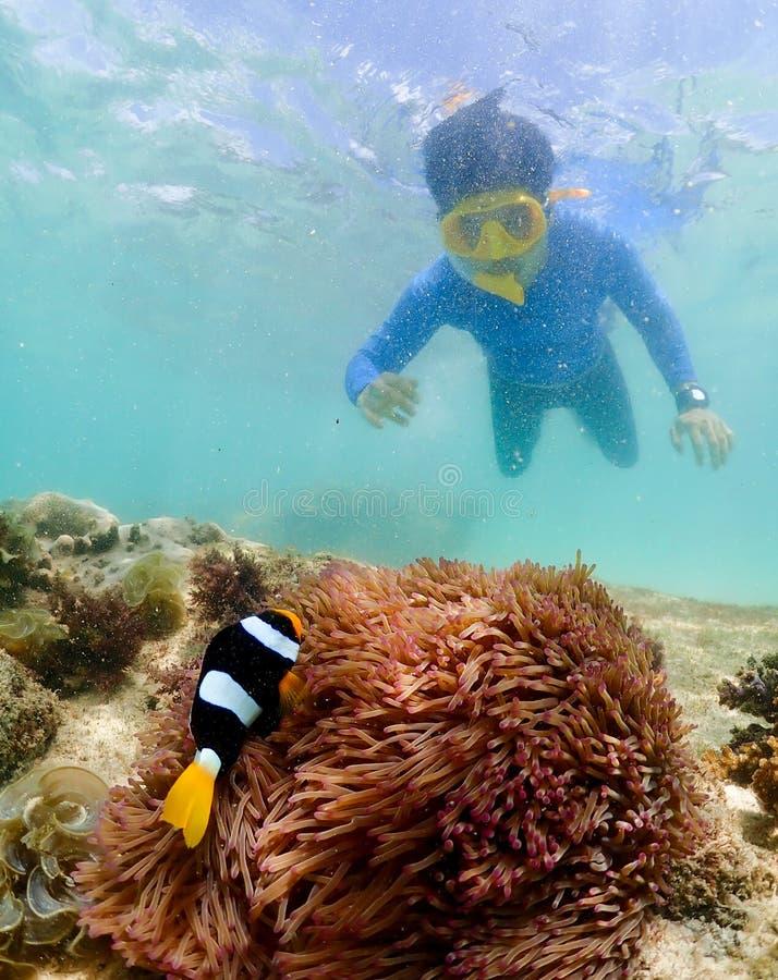Snorkla på ön i det Thailand havet arkivfoto