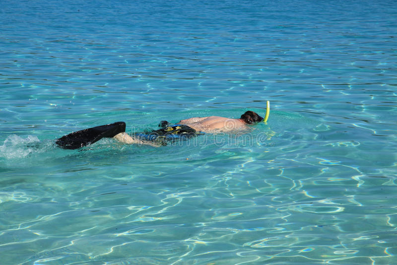 Snorkla på den Coki fjärden i St Thomas royaltyfri fotografi