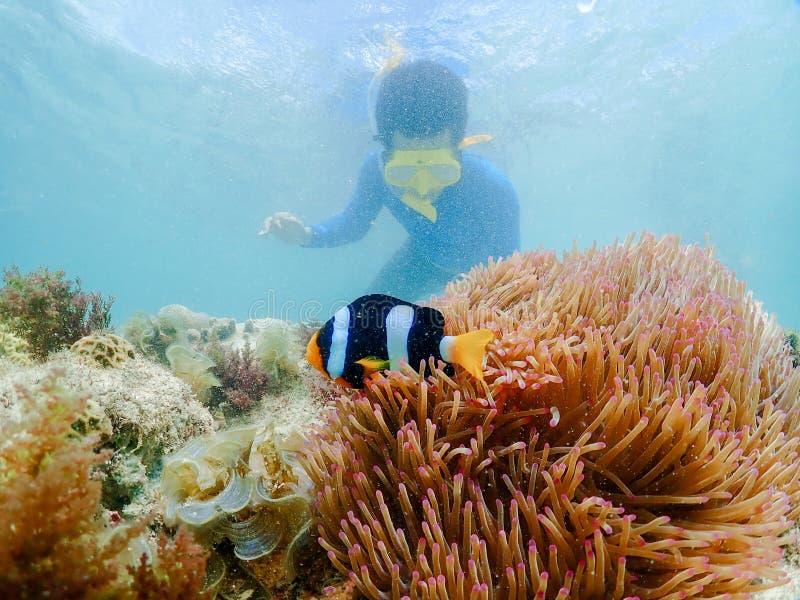 Snorkla p? ?n i det Thailand havet royaltyfri fotografi