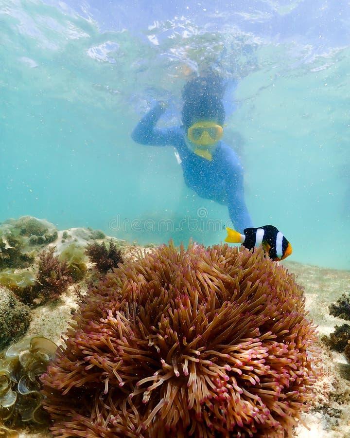 Snorkla p? ?n i det Thailand havet arkivbilder
