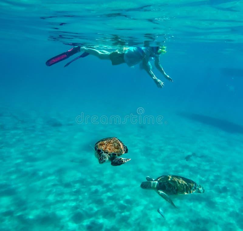 Snorkla runt om Westpunt med sköldpaddor royaltyfria foton