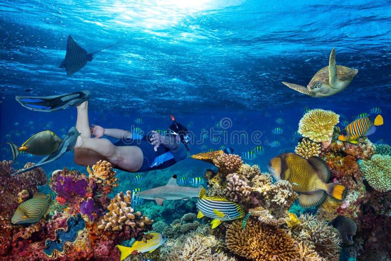 snorkling水下的珊瑚礁的风景 免版税库存照片
